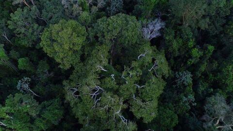 Inpe cria plataforma gratuita de dados do solo brasileiro