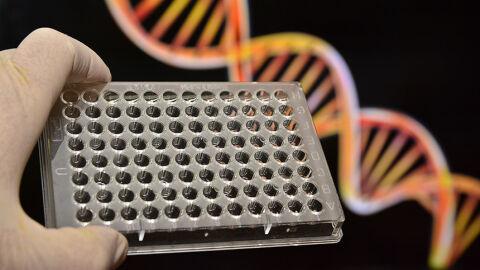 Nova lei autoriza teste de DNA em parentes para confirmar paternidade