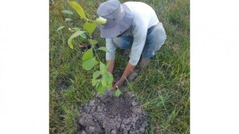 Projeto do Senar-MT auxilia produtores de Vila Rica a recuperarem áreas degradadas