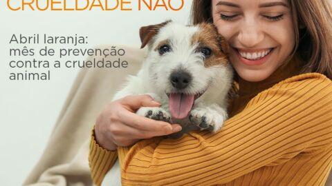 """Subsecretaria do Bem-Estar Animal promove live com o tema """"Direito Animal e as 5 liberdades"""