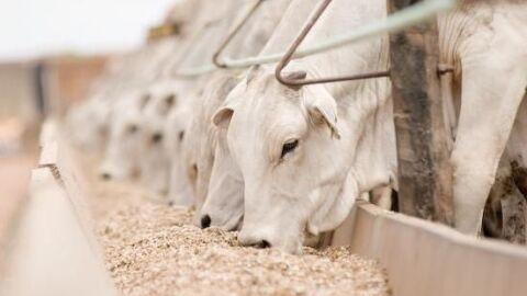 Estação seca pode gerar redução de rendimento para o produtor de gado