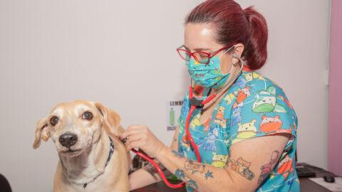 Prefeitura lança programa de apoio a ONG's e protetores independentes da causa animal