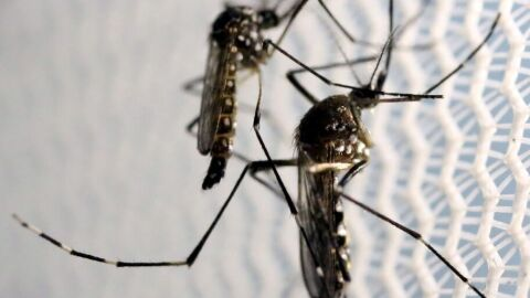 Casos de chikungunya crescem no estado de SP no início deste ano