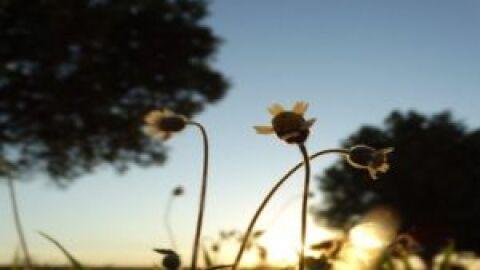 Quinta-feira de refresco nas temperaturas em grande parte de Mato Grosso do Sul