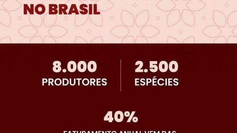 Você sabia que o Brasil cultiva mais de 2,5 mil espécies de flores e plantas?