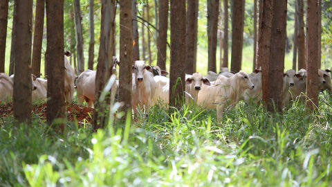 Baixa emissão de carbono é aposta para produção sustentável de alimentos