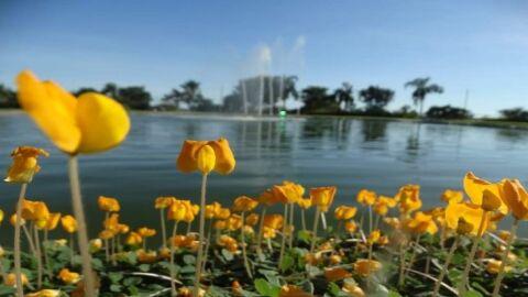 Sol brilha forte em Mato Grosso do Sul neste domingo dedicado às mães