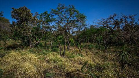 Senar mostra ações do projeto FIP Paisagens Rurais no Maranhão