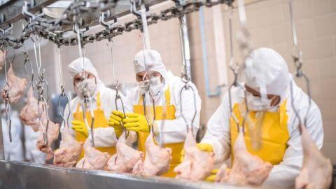Brasil irá à OMC contra restrições de exportações de aves para Arábia Saudita