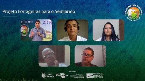 "Dia de campo virtual mostra resultados do projeto ""Forrageiras para o Semiárido"" na Bahia"