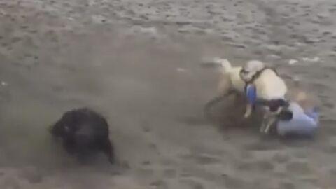 Vídeo: vaqueiro morre 'atropelado' por cavalo em vaquejada; imagens fortes
