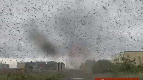 Vídeo: céu na Rússia é 'invadido' por tornado de mosquitos