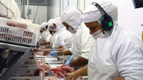 MS se mantém na liderança da exportação de tilápia no primeiro semestre de 2021