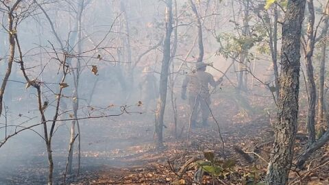 'Queima controlada' no Pantanal está suspensa até 30 de outubro