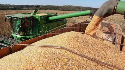 Com mais de 56% comercializada, colheita do milho avança devagar no Estado