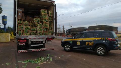 PRF apreende 500 mil maços de cigarros contrabandeados em São Gabriel Do Oeste (MS)