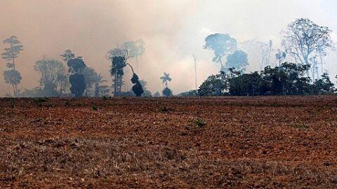 'Irrisória': Mourão assume que redução do desmatamento será metade do prometido