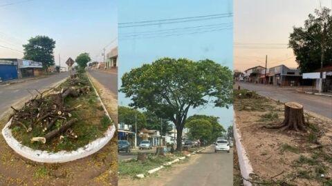 """Nas vésperas do Dia da Árvore, mais de 100 são cortadas; """"sujam muito"""" diz prefeito"""
