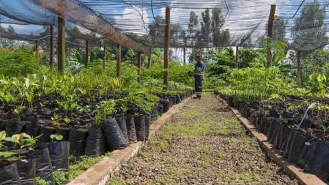 Empresa planta 500 árvores em área queimada do Parque dos Poderes