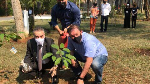 Plantio e distribuição de ipês marcam Dia da Árvore na Assembleia Legislativa de MS