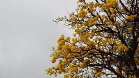 Chuva ameniza calorão e melhora umidade do ar no primeiro domingo da primavera