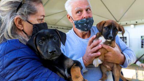 Fim da carrocinha: Lei proíbe eliminação de cães e gatos no Brasil