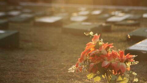 Dia de Finados: flores ficam mais caras e chegam a custar R$ 500 em MS
