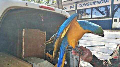PMA de Campo Grande recolhe arara, maracanã e periquito feridos por cerol