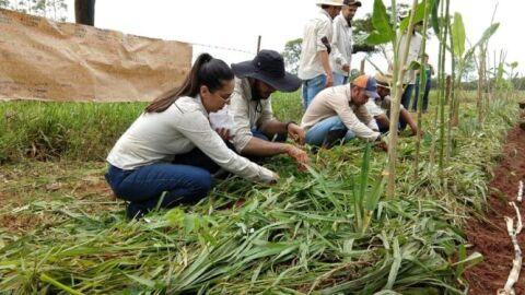 Governo tenta liberar R$ 60 milhões para agricultura familiar em MS