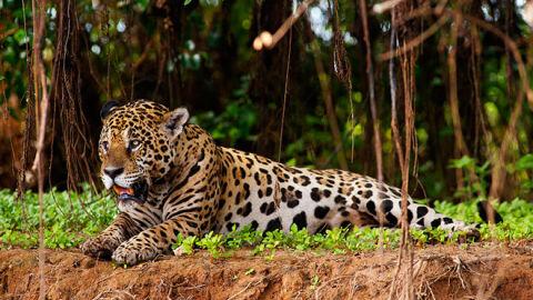 Produtor 'deixa escapar' que série semelhante a novela 'Pantanal' será gravada em MS