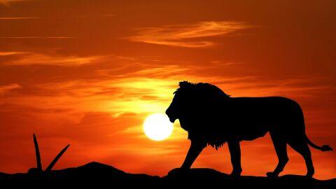 Finalmente o Sol chega a Leão; veja como reagem os signos