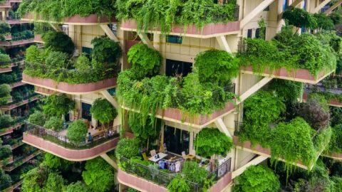 Vídeo: habitação verde sai do controle e plantas 'expulsam' moradores