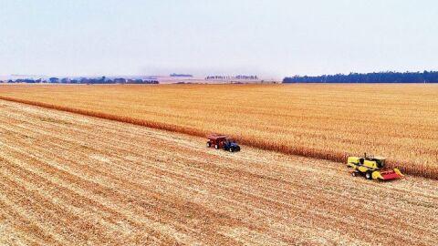 MS é o 14º maior produtor de milho do mundo