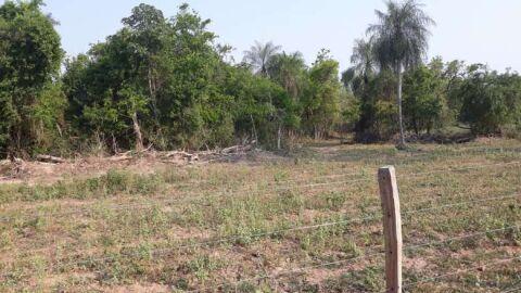 Fazendeiro de 68 anos leva multa por desmatamento e exploração ilegal de madeira