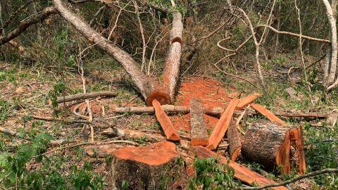 PMA autuam dois por exploração ilegal de madeira