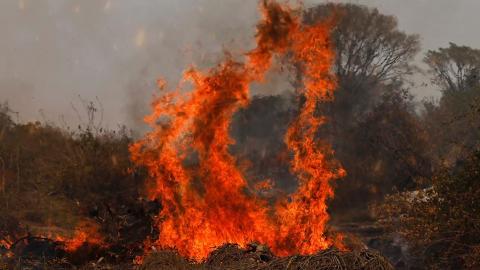 Vídeo: casal luta por reserva e pede socorro com imagens de fogo no Pantanal