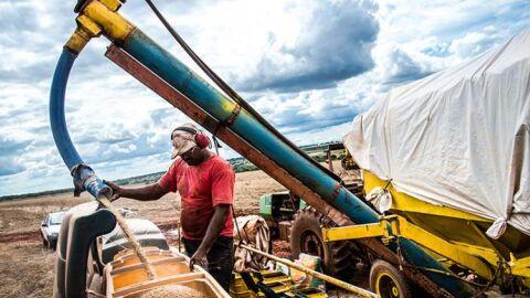 Na pandemia, a agropecuária registrou saldo positivo na geração de empregos em MS