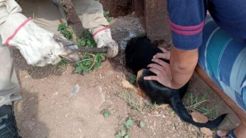 Bombeiros resgatam cão que ficou com cabeça presa em buraco