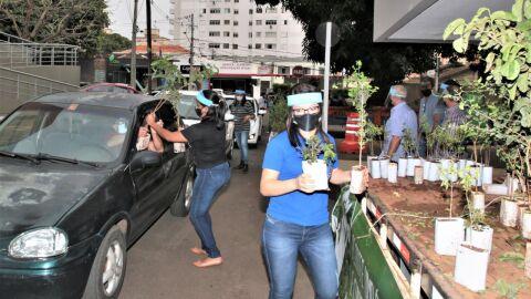 Sete mil mudas de árvores frutíferas serão doadas neste sábado na Capital