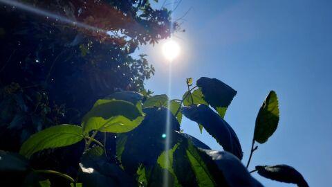 Calor atinge 50°C no Brasil, MS registra 42°C; veja a previsão desta 4ª-feira