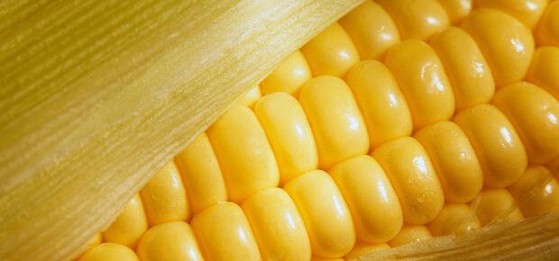 Produção de milho e trigo deve ter queda na safra 2015/2016