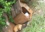 Cachorro é abandonado em porta de igreja com casinha e ração
