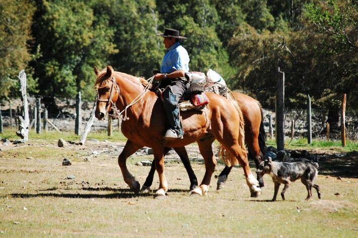 Capataz montado a uma cavalo seguido por cachorros