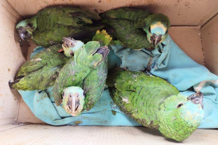 Papagaios resgatados
