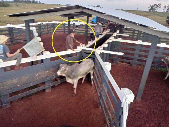 Círculo mostra Paulo Cupertino trabalhando em curral de sítio em Eldorado, Mato Grosso do Sul, onde cuidava do gado
