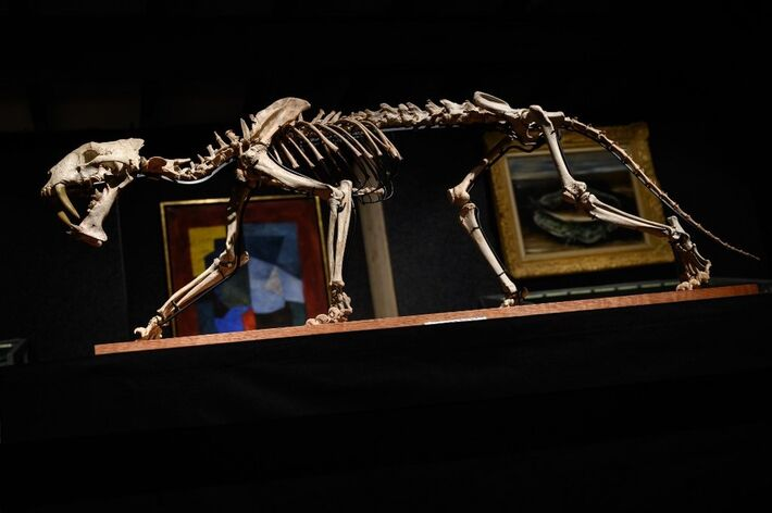 Esqueleto que foi leiloado na Suíça