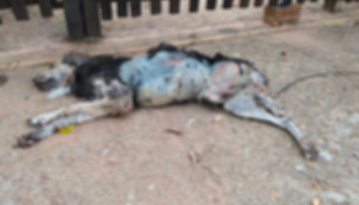 Cachorrinho morreu em casa