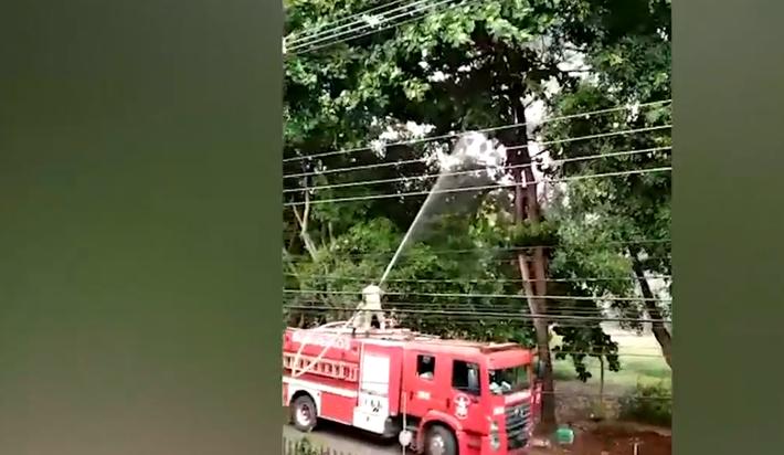 Bombeiros atiram jato-dágua em gatinho filhote para salvá-lo