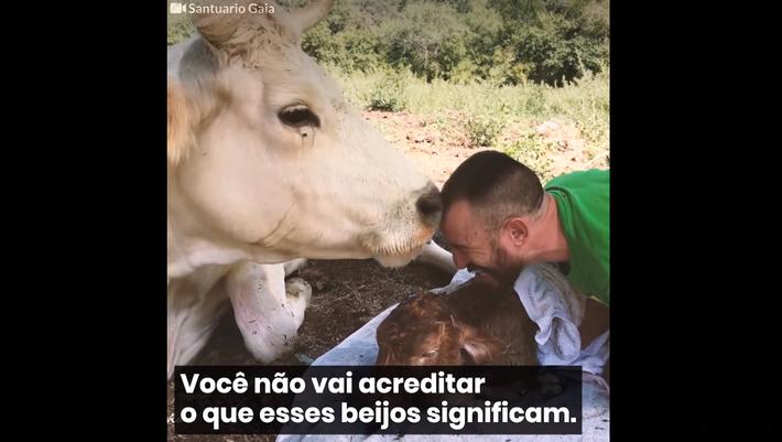 Vaca no Santuario Gaia