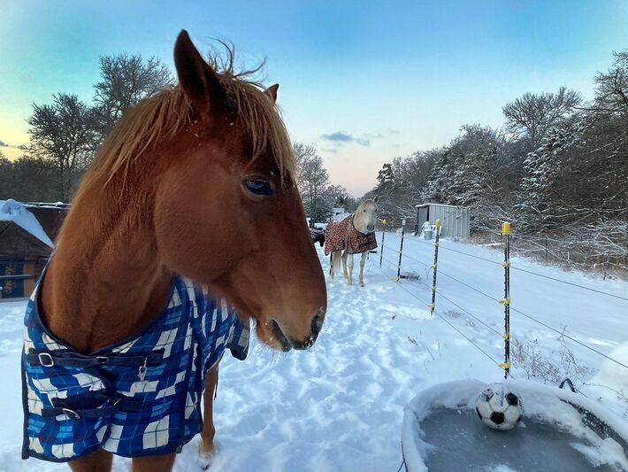 Bebedouro de cavalo com água congelada no Texas, em 15 de fevereiro de 2021